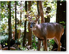 Acrylic Print featuring the photograph Hunters Dream 10 Point Buck by Peggy Franz