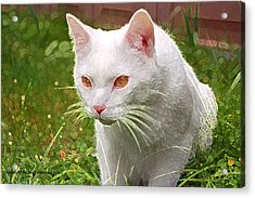 Acrylic Print featuring the photograph Hunting Cat by Tyra  OBryant