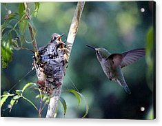 Acrylic Print featuring the photograph Hurry Mom by Jo Sheehan