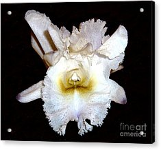 Hybrid White Orchid Acrylic Print by Merton Allen