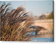 Acrylic Print featuring the photograph Hyde Park by Harvey Barrison