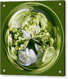 Hydrangea Orb Acrylic Print by Sandi Blood