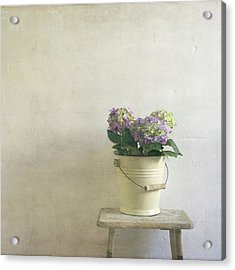 Hydrangea Resting On Stool Acrylic Print by Paul Grand Image