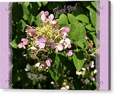Hydrangea Thank You Acrylic Print by Larry Bishop