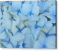 Hydrangeas Hortensias Acrylic Print by Sandra Lira