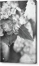 Hydrangeas In Black And White Acrylic Print by Stephanie Frey