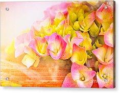 Hydrangeas In Bloom Acrylic Print by Elaine Manley