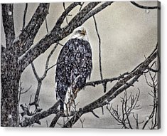 I Am Cold Acrylic Print by Gary Smith