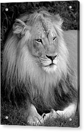 Acrylic Print featuring the photograph I Am King by Renee Hardison