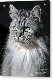 I Am Not Amused Acrylic Print by Graham Taylor