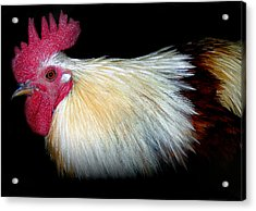 I Came First Acrylic Print by Skip Willits