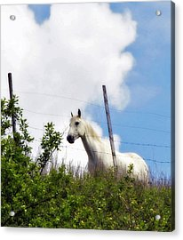 I Dreamt Of A White Horse Acrylic Print