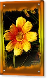 Acrylic Print featuring the photograph I Have My Eye On You by Itzhak Richter