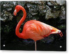 Acrylic Print featuring the photograph I Know I Look Good by Jeanne Andrews