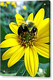 I Love Pollen Acrylic Print by Maria Scarfone