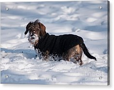Acrylic Print featuring the photograph I Love Snow by Andrew  Michael