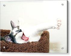 I Said Meow Already Acrylic Print by Jack Norton