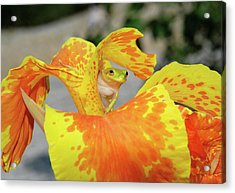 Acrylic Print featuring the photograph I See You by Kathy Gibbons