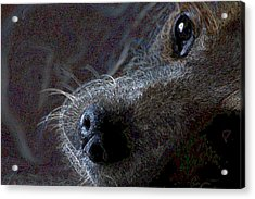 I See You Acrylic Print by One Rude Dawg Orcutt