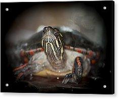 I Spy A Turtle Acrylic Print by LeeAnn McLaneGoetz McLaneGoetzStudioLLCcom