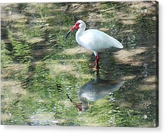 Acrylic Print featuring the photograph I Stand Alone by Kathy Gibbons
