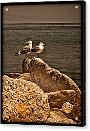 Afitos, Greece - I Think We're Alone ... Acrylic Print