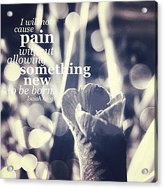 ...i Will Not Cause Pain Without Acrylic Print by Traci Beeson