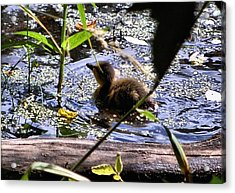 I Wish I Could Fly Acrylic Print by Don Mann