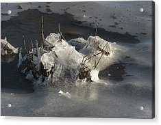 Ice And Salt Marsh Grasses Acrylic Print by George Grall