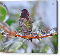 Acrylic Print featuring the photograph Ice Cold Hummer by Jack Moskovita