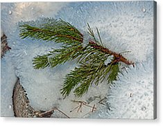 Acrylic Print featuring the photograph Ice Crystals And Pine Needles by Tikvah's Hope