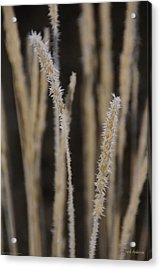 Ice Crystals On Tall Grass Acrylic Print by Mick Anderson
