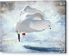 Swans Dance Of Spring Acrylic Print