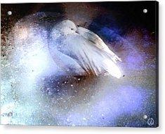 Icebound Acrylic Print by Gun Legler