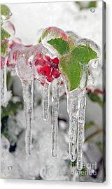 Iced Holly Acrylic Print