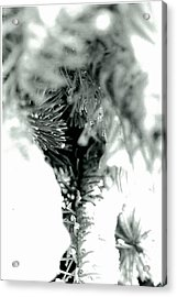 Iced Needles Buried In Snow Acrylic Print by Suzanne Fenster