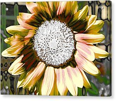Iced Oatmeal Cookie Sunflower Acrylic Print by Devalyn Marshall