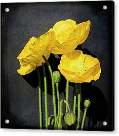Iceland Yellow Poppies Acrylic Print by Paul Grand Image
