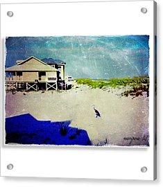 Ichabod   Acrylic Print