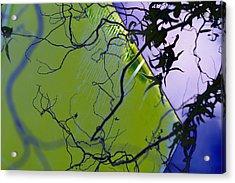iCurly.09 Acrylic Print