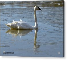 Acrylic Print featuring the photograph Icy Chill by Brian Stevens