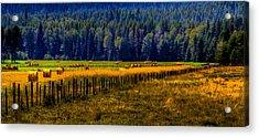 Idaho Hay Bales  Acrylic Print by David Patterson
