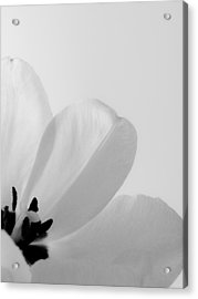Acrylic Print featuring the photograph Idem by Julia Wilcox