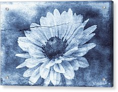 If Daisies Wore Blue Jeans Acrylic Print by Christine Annas