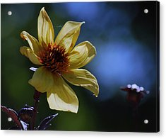 Acrylic Print featuring the photograph If I Could Paint by Amee Cave