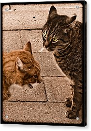 Albuquerque, New Mexico - If Looks Could Kill Acrylic Print