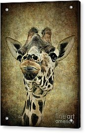 If You've Got It...flaunt It Acrylic Print by Sami Martin