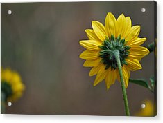 Acrylic Print featuring the photograph Ignoring You by Amee Cave