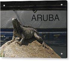 Acrylic Print featuring the photograph Iguana by David Gleeson