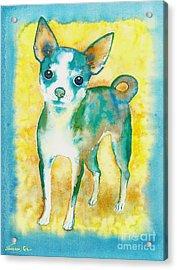 Ilio Chihuahua Acrylic Print